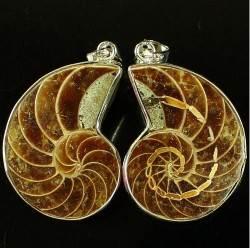 Аммонит-История-происхождение-и-свойства-камня-4