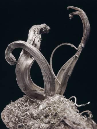 Что-такое-самородное-серебро-История-происхождение-и-свойства-6
