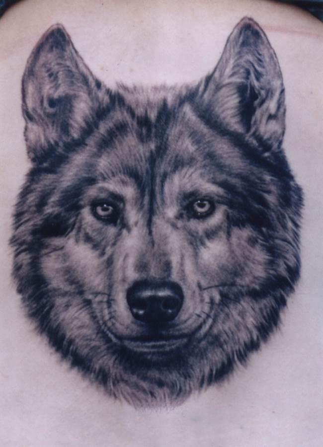 Тату-волк-2