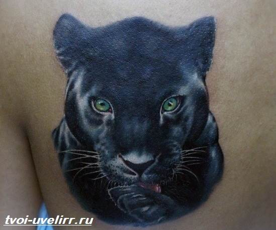 Тату-пантера-Значение-тату-пантера-Эскизы-и-фото-тату-пантера-5