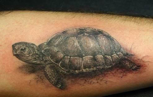 Тату-черепаха-3