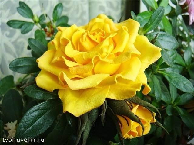 Что-такое-фоамиран-Цветы-из-фоамирана-19