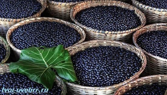 Ягоды-Асаи-Свойства-применение-отзывы-и-цена-ягоды-Асаи-3