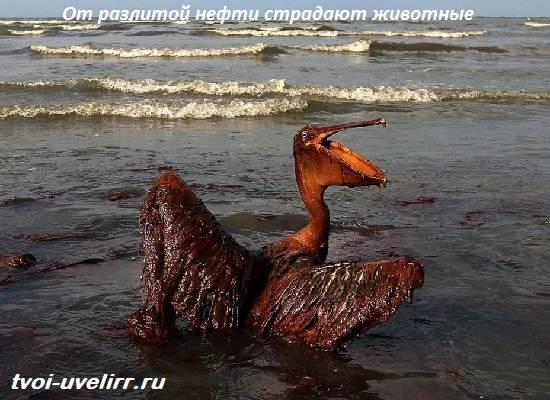 Что-такое-нефть-Свойства-добыча-применение-и-цена-нефти-5