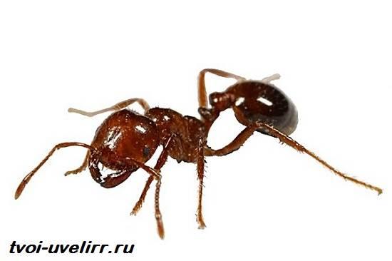 Муравьиная-кислота-Свойства-применение-и-цена-муравьиной-кислоты-1