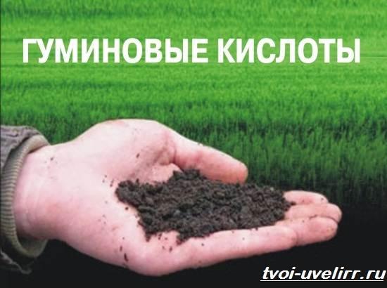 Гуминовая-кислота-Свойства-добыча-применение-и-цена-гуминовой-кислоты-1