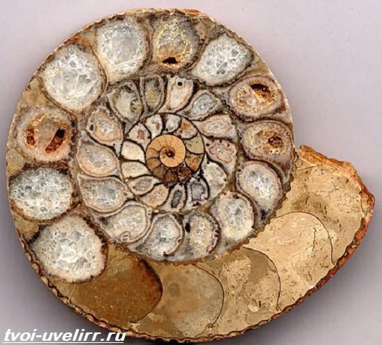 Что-такое-аммонит-Свойства-месторождения-применение-и-цена-аммонита-3
