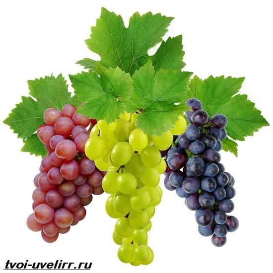 Винная-кислота-Свойства-получение-применение-и-цена-винной-кислоты-4